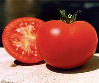 БАГИРА F1  - семена томата детерминантного 5 грамм, CLAUSE