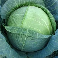 Джетодор F1 - семена белокочанной капусты 2 500 семян, Syngenta