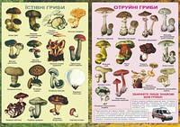Плакат. Їстівні та отруйні гриби