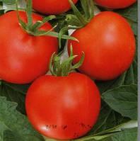 ТОЛСТОЙ F1 - семена томата индетерминантного, 5 грамм, Bejo Zaden