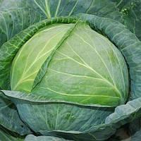 АГРЕСОР Польща F1 - насіння капусти, 2 500 насіння, Syngenta, фото 1