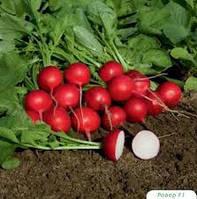 СЕЛЕСТА F1 - семена редиса, 250 грамм, Enza Zaden