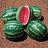 СТЕТСОН F1 - семена арбуза, 1 000 семян, CLAUSE