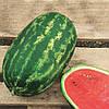НЕЛЬСОН F1 - семена арбуза, 1 000 семян, CLAUSE
