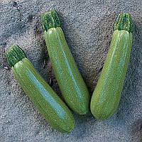 МОСТРА F1 - семена кабачка, 500 семян, CLAUSE