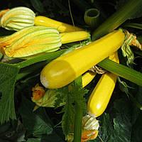 МЕРИ ГОЛД F1 - семена кабачка, 1 000 семян, CLAUSE