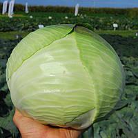МАРАБУ F1   - семена капусты белокочанной, 2 500 семян, CLAUSE