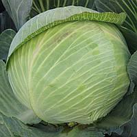 ГИГАНТ F1  - семена капусты белокочанной, 2 500 семян, CLAUSE