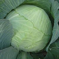 СКИФ F1  - семена капусты белокочанной, 2 500 семян, CLAUSE