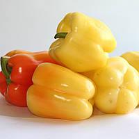 МАДОННА F1  - семена сладкого перца, 500 семян, CLAUSE