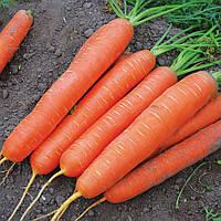 САТУРНО F1  - семена моркови, 25 000 семян, CLAUSE