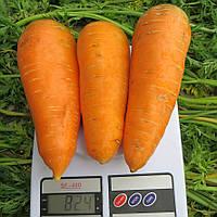 БОЛТЕКС  - семена моркови,  500 грамм, CLAUSE, фото 1