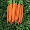 СТРОМБОЛИ F1 - семена моркови,  100 000 семян, CLAUSE