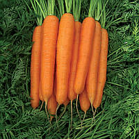 СТРОМБОЛИ F1 - семена моркови,  100 000 семян, CLAUSE, фото 1