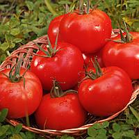 К 20.48 F1 - семена томата индетерминантного, 250 семян, CLAUSE
