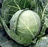 БОЛИКОР F1 - семена белокочанной капусты, 2 500 семян, Syngenta