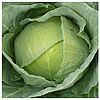 БРАКСАН F1 - семена белокочанной капусты, 2 500 семян, Syngenta