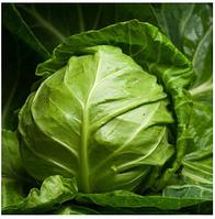 ВЕРОНОР F1 - семена белокочанной капусты, 2 500 семян, Syngenta, фото 1