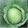 ЗЕНОН F1 - семена белокочанной капусты, 2 500 семян, Syngenta