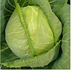 КИЛАГЕРБ F1 - семена белокочанной капусты, 2 500 семян, Syngenta