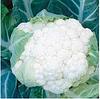 КОРЛАНУ F1 - семена цветной капусты, 2 500 семян, Syngenta