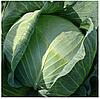 ЛИБЕРАТОР F1 - семена белокочанной капусты, 2 500 семян, Syngenta