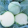 НОВАТОР F1 - семена белокочанной капусты, 2 500 семян, Syngenta