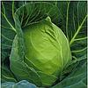 ПРУКТОР F1 - семена белокочанной капусты, 2 500 семян, Syngenta