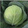 ТРИПЕРИО  F1 - семена белокочанной капусты, 2 500 семян, Syngenta