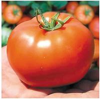 БОБКАТ F1 - семена томата детерминантного, 1 000 семян, Syngenta, фото 1