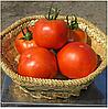 ГРАВИТЕТ  F1 - семена томата полудетерминантного,  2 500 семян, Syngenta