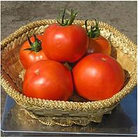 ГРАВИТЕТ  F1 - семена томата полудетерминантного,  2 500 семян, Syngenta, фото 1