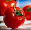 КАБИНЕТ F1 - семена томата полудетерминантного, 1 000 семян, Syngenta