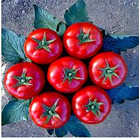 МИНАРЕТ F1 - семена томата полудетерминантного, 500 семян, Syngenta, фото 1