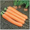 ДОРДОНЬ F1 - семена моркови (1,6+), 50 000 семян, Syngenta
