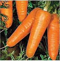 РЕДКО - семена моркови, 100 000 семян, Syngenta