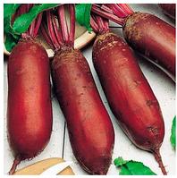 ФОРОНО - семена свеклы столовой, 100 000 семян, Syngenta, фото 1