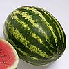ТОП ГАН F1 - семена арбуза, 1 000 семян, Syngenta