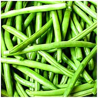 КОНЗА - семена фасоли спаржевой, 100 000 семян, Syngenta., фото 1