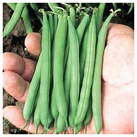 ПАТИОН - семена фасоли спаржевой, 100 000 семян, Syngenta