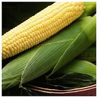 БОСТОН F1 - семена кукурузы суперсладкой, 50 000 семян, Syngenta