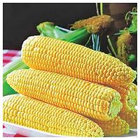 СПИРИТ F1 - семена кукурузы суперсладкой, 1кг, Syngenta, фото 1
