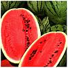 АСТРАХАН F1 - семена арбуза, 1 000 семян, Syngenta
