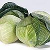 АКВАРЕЛЬ F1 - семена капусты белокочанной, 2 500 семян, Bayer