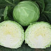 АНАДОЛЬ F1 - семена капусты белокочанной, 2 500 семян, Bayer, фото 1