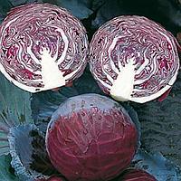 ПРИМЬЕРО F1 - семена капусты краснокочанной, 2 500 семян, Bejo Zaden, фото 1