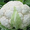 СКАЙВОКЕР F1 - семена капусты цветной, 2 500 семян, Bejo Zaden