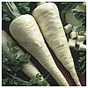 ИГЛ - семена петрушки корневой, 50 грамм, Bejo Zaden