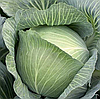 МУКСУМА F1 - семена капусты белокочанной, 1 000 семян, Rijk Zwaan