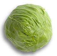 РЕЙМА F1 - насіння капусти білоголової, 1 000 насінин, Rijk Zwaan